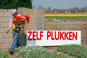 Pluktuin in Lisse