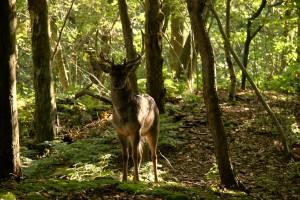 natuur en bos