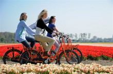 Rent a bike at Keukenhof and enjoy the flower fields