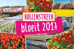 Bollenstreek Bloeit in het voorjaar