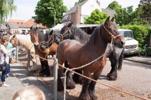 Paardenmarkt RIjnsburg