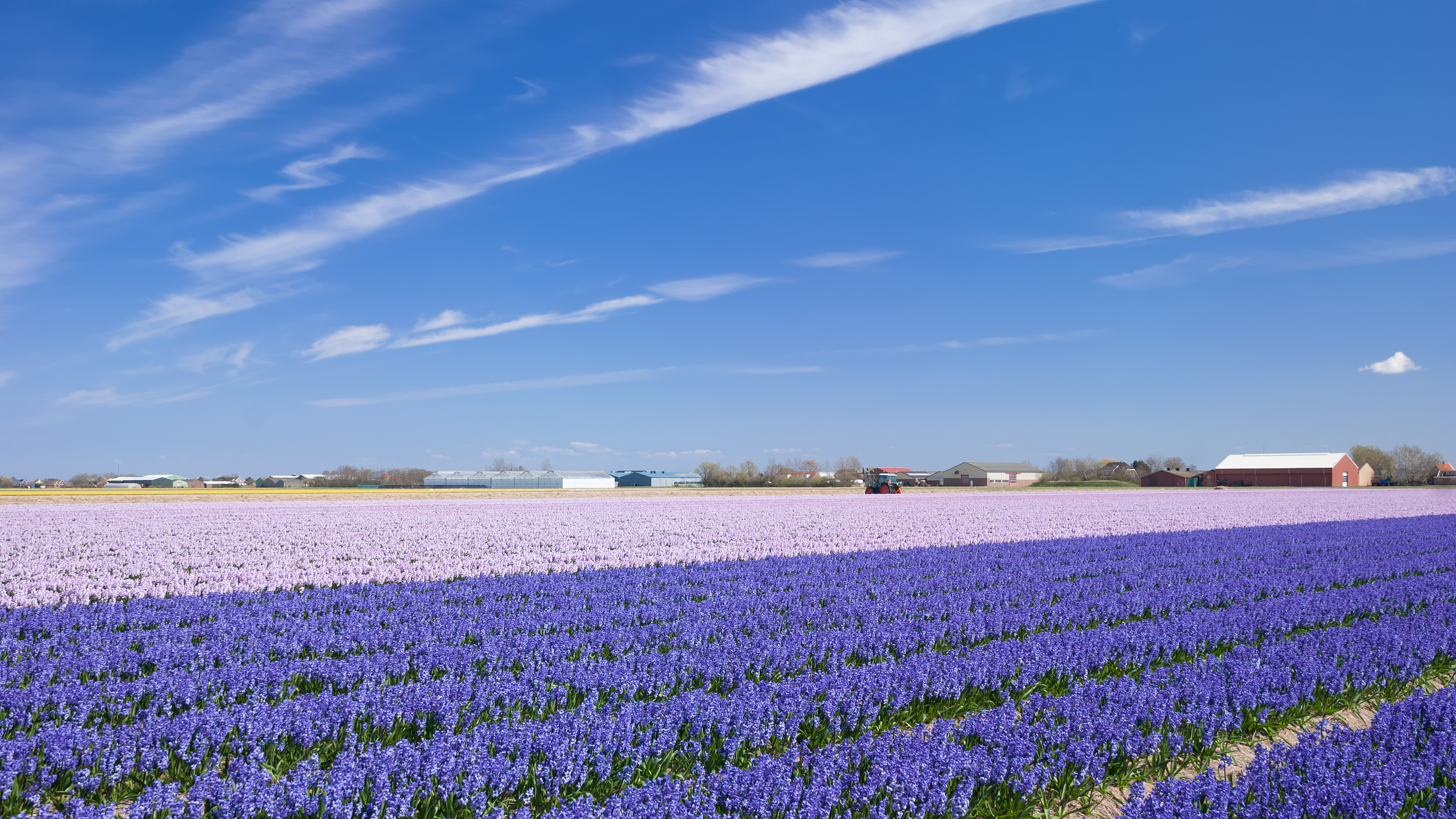 When Are The Flower Fields In The Netherlands Blooming Bollenstreek