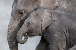 Artis Amsterdam: Europa's oudste dierentuin