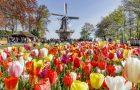 Profitez de vos vacances dans les champs de fleurs autour des jardins de Keukenhof