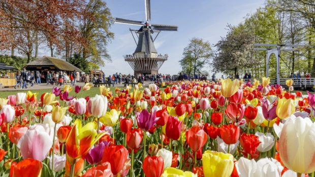 Enjoy your holiday to the flower fields around Keukenhof Gardens