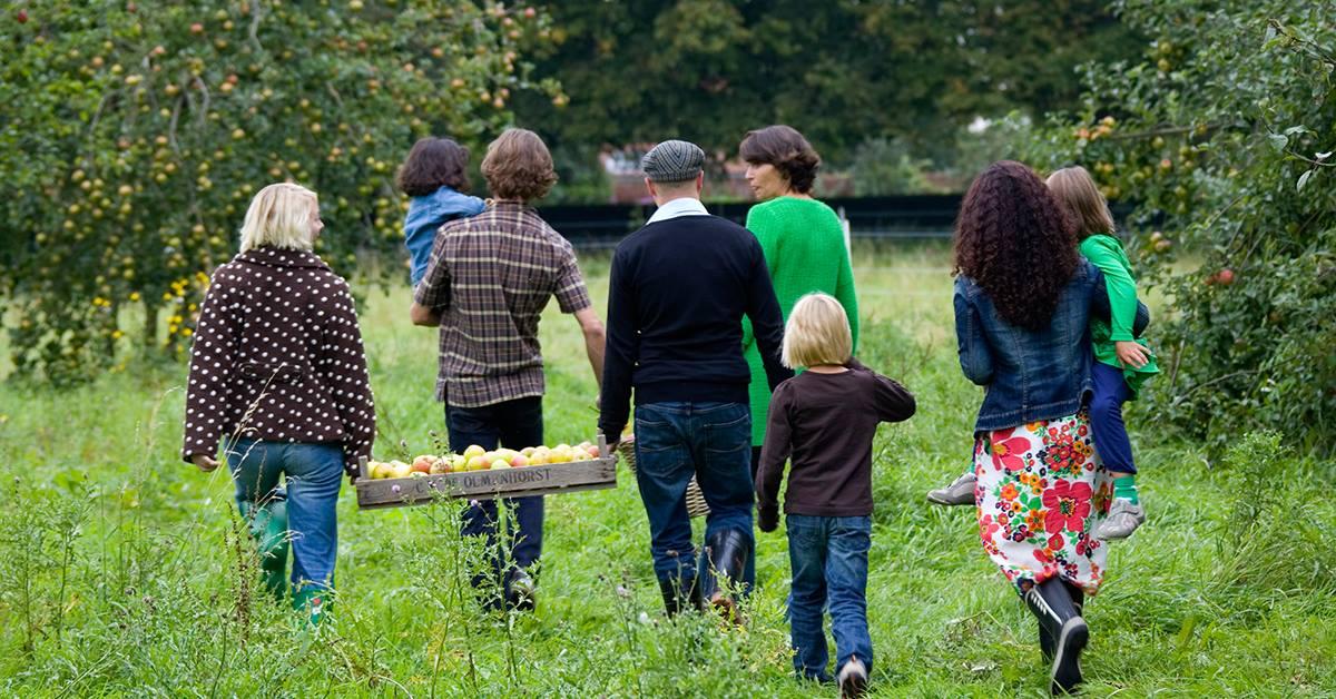 Zelf appels en peren plukken bij de Olmenhorst