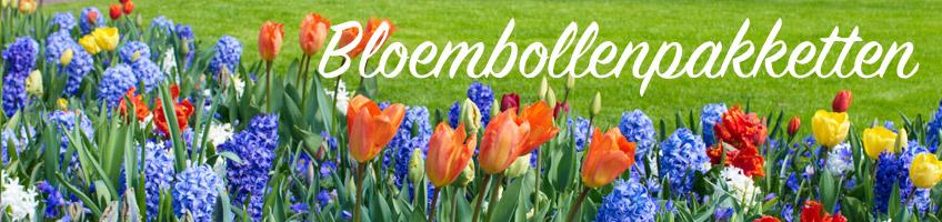 Koop En Plant Nu Je Bloembollen Voor Een Kleurrijk Voorjaar