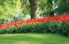Keukenhof Hotel Package from Fletcher hotels
