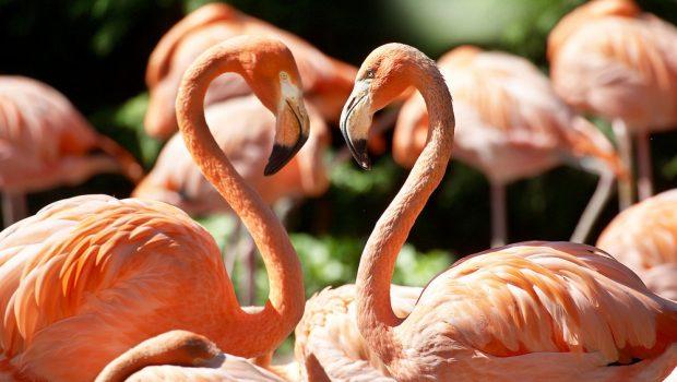 Vogelpark Avifauna – Vogels en speeltuin