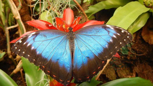 Vlindertuin – Vlinders aan de Vliet