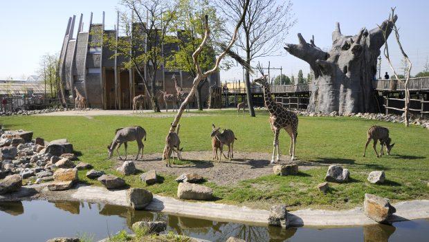 Diergaarde Blijdorp, de dierentuin van Rotterdam