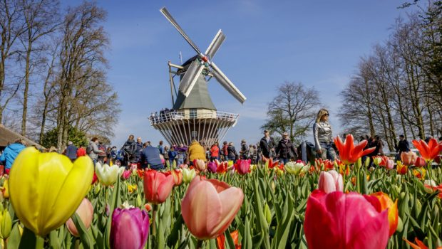 Travel to Keukenhof