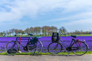 Bollenstreek fietsroute langs strand, duinen en bloemen