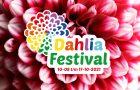 dahlia festival
