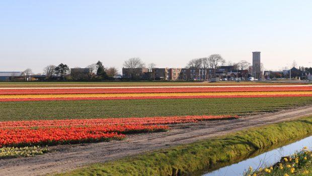 Wanneer bloeien de tulpenvelden