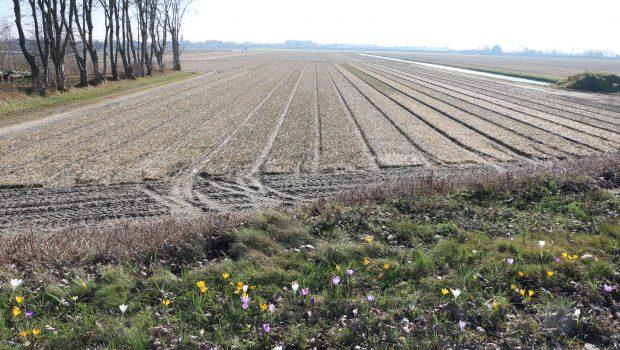 Blumenfelder Holland