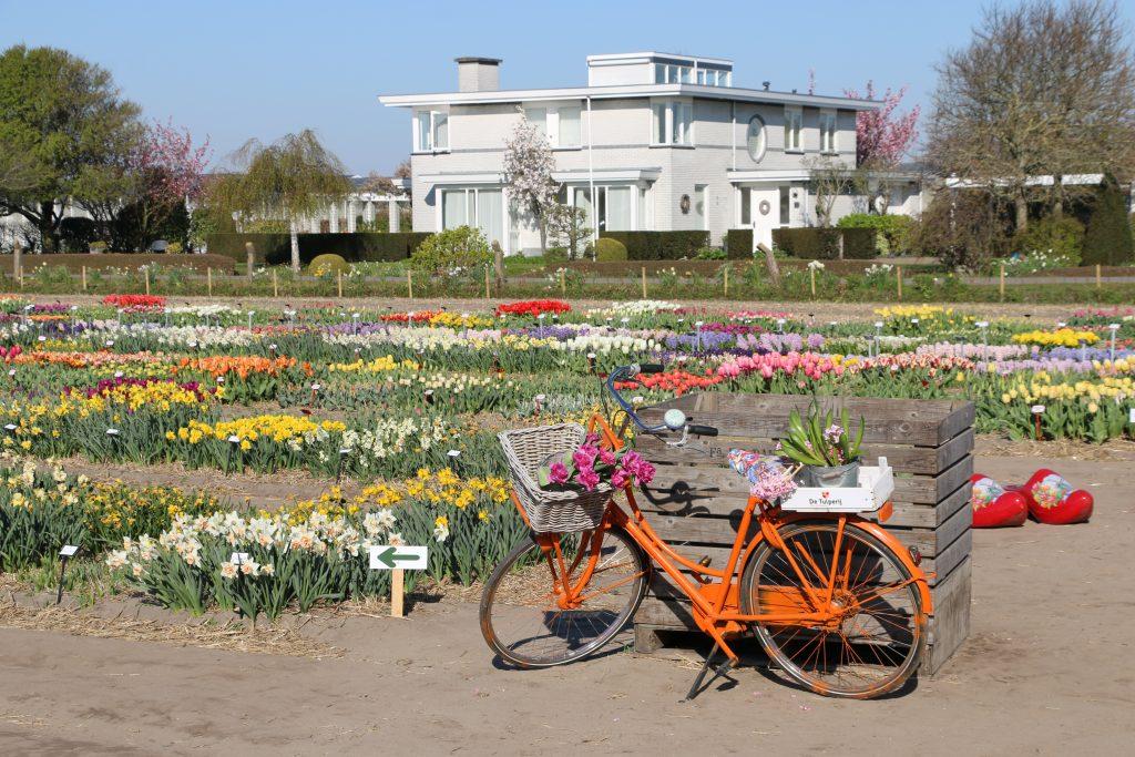 terras bij de tulpenvelden